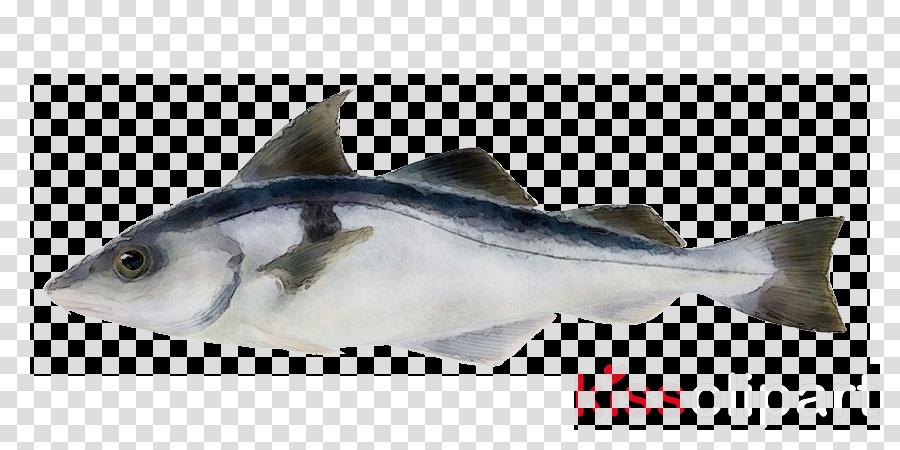 fish fish fin fish products albacore fish