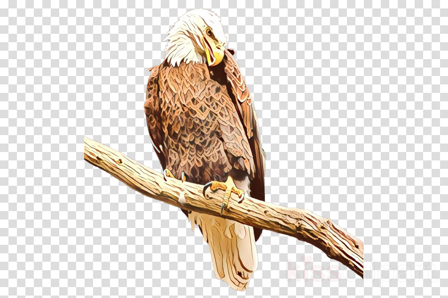bird bird of prey kite eagle beak