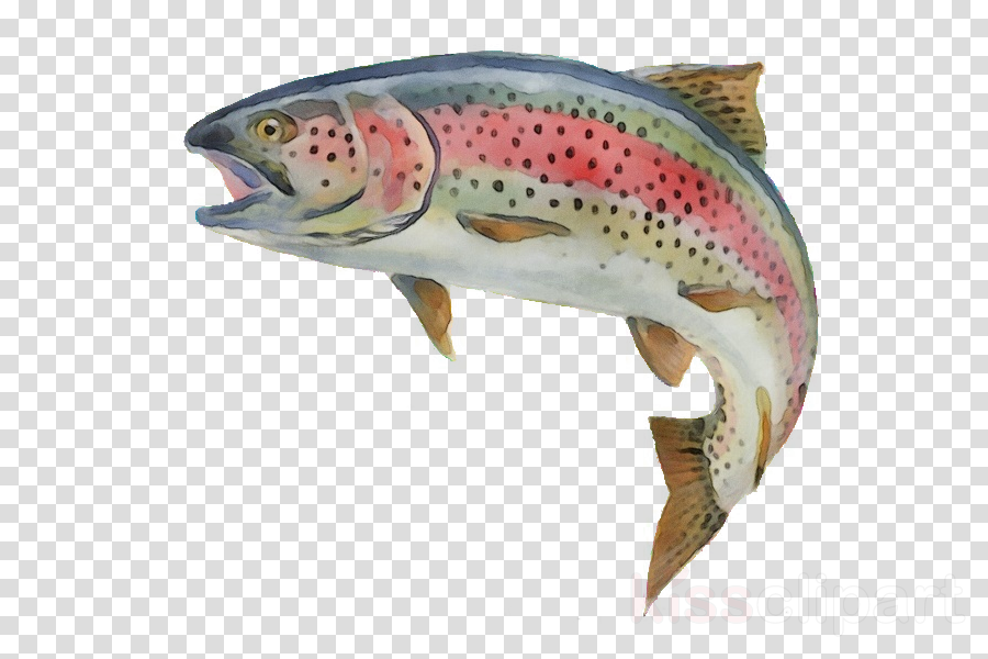 fish brown trout trout fish salmon