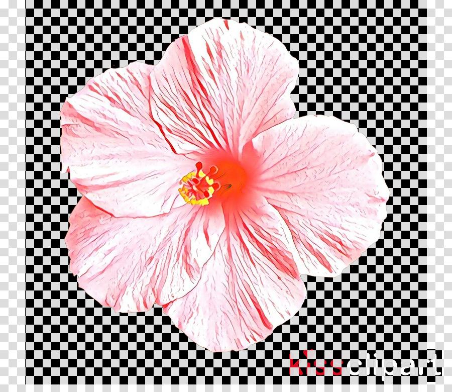 hibiscus petal pink hawaiian hibiscus flower