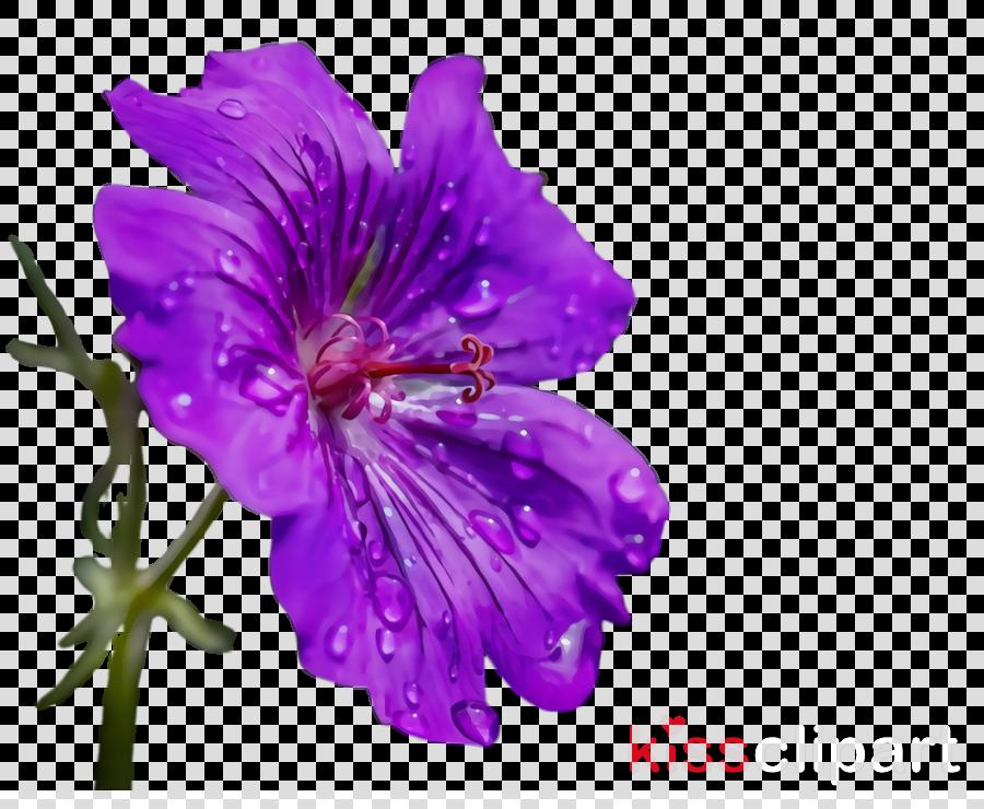 flower petal purple violet plant