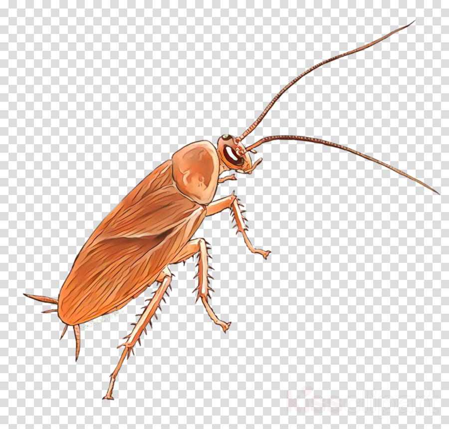 insect pest cockroach beetle termite