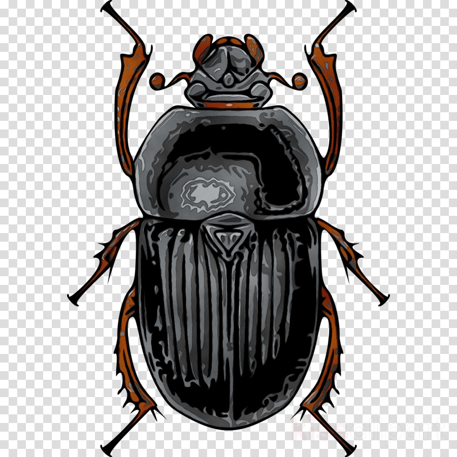 insect elephant beetle stag beetles beetle clip art