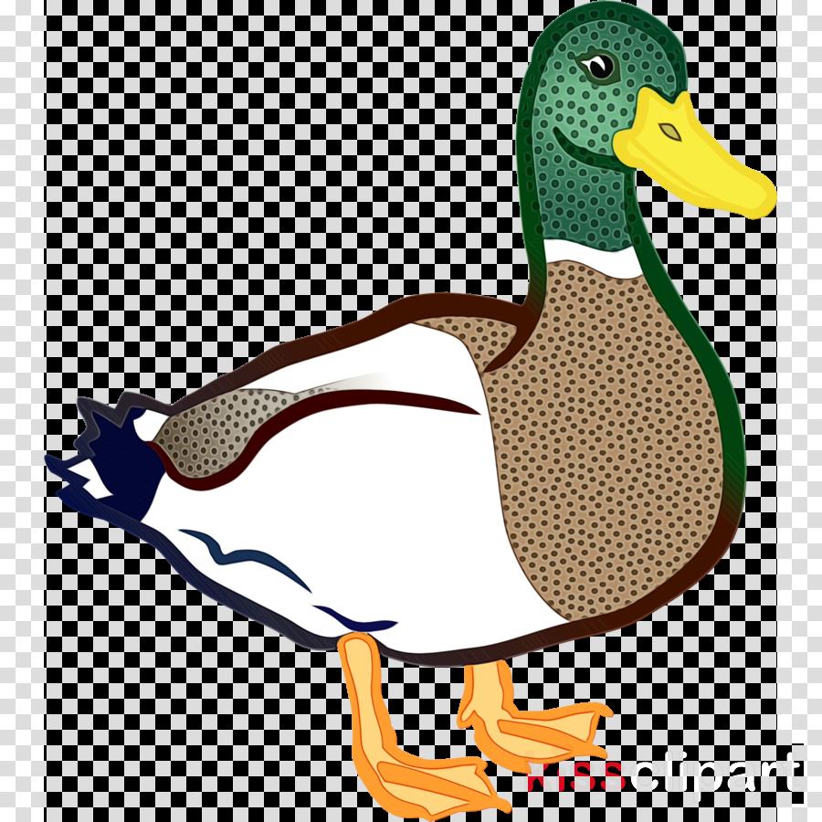 duck bird mallard ducks, geese and swans water bird