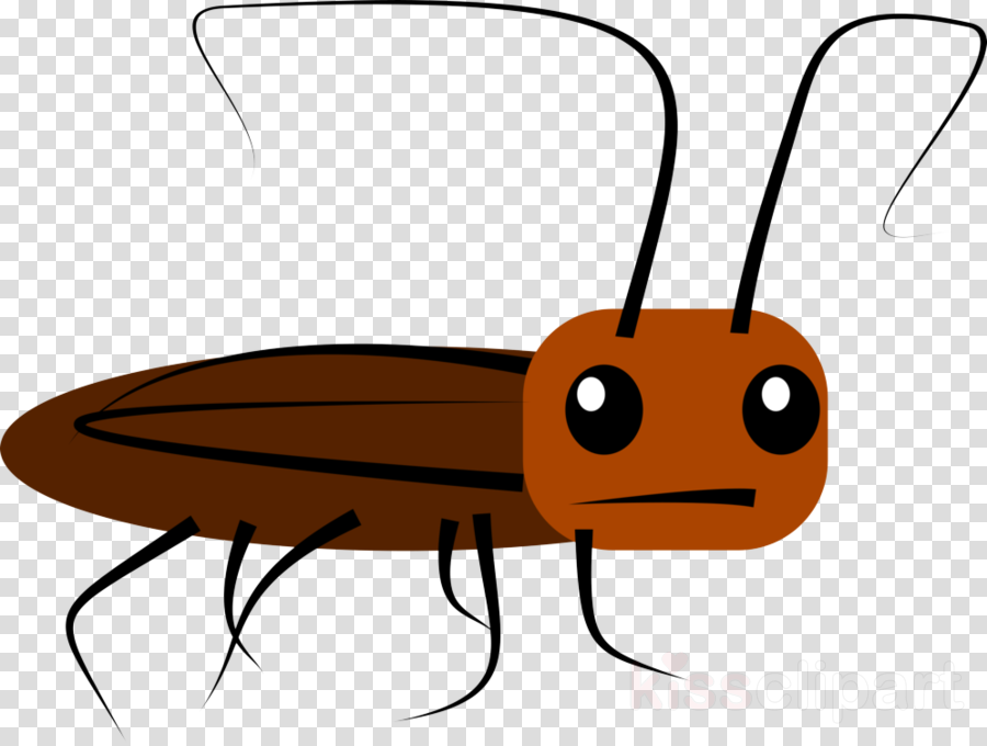 insect pest clip art membrane-winged insect cockroach