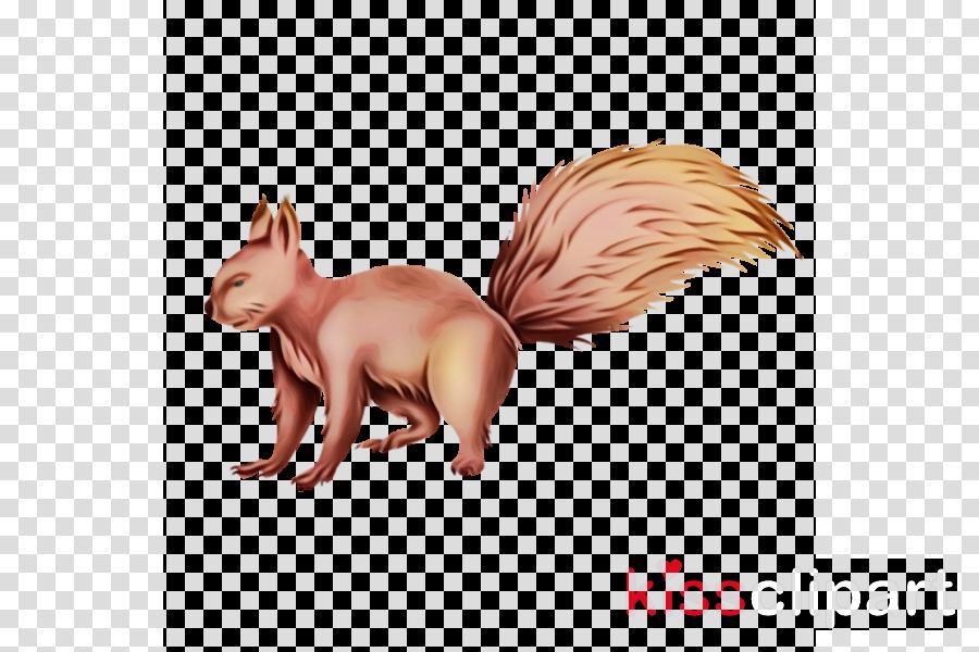 squirrel tail ferret clip art