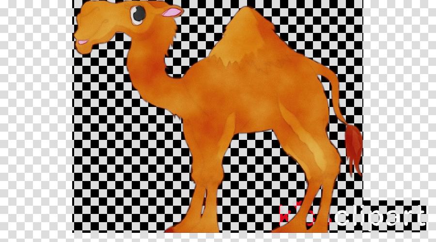 camel arabian camel camelid animal figure bactrian camel