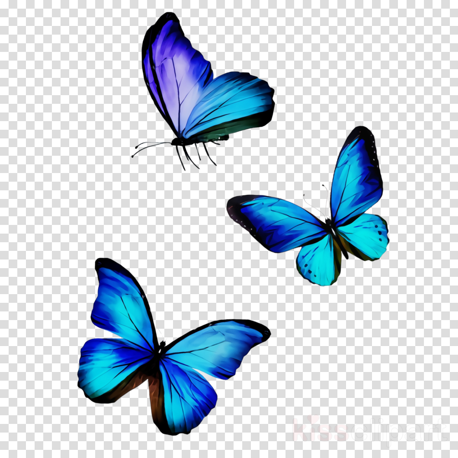butterfly insect blue moths and butterflies pollinator