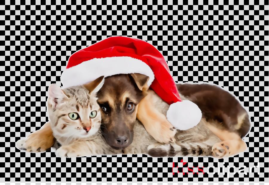 dog puppy dog breed christmas german shepherd dog