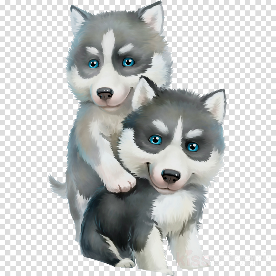 siberian husky miniature siberian husky dog alaskan malamute sakhalin husky