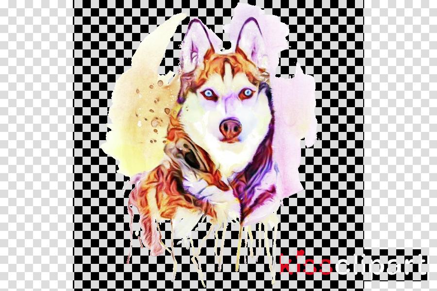 dog siberian husky alaskan malamute sled dog dog breed