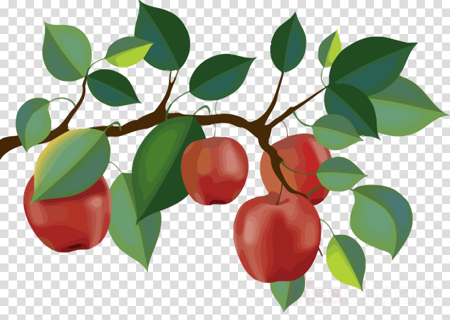 Conditional Fruit Tree With Fruits That Grow On Trees From Different..  Royalty Free Cliparts, Vectors, And Stock Illustration. Image 41548370.