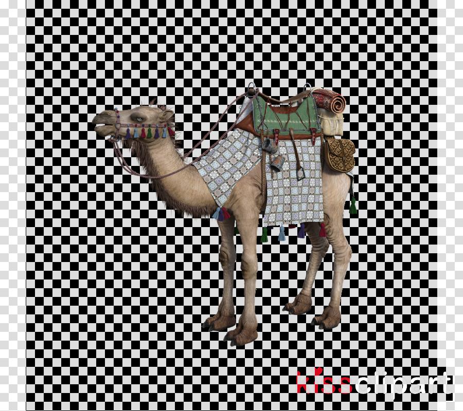 camel camelid arabian camel livestock animal figure