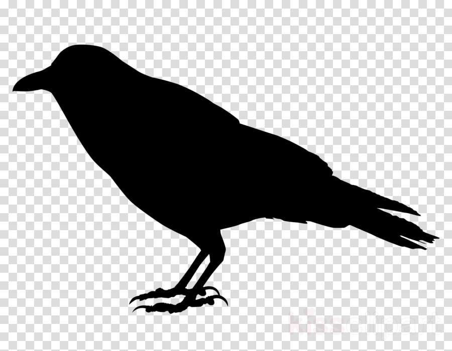 bird beak crow crow-like bird silhouette