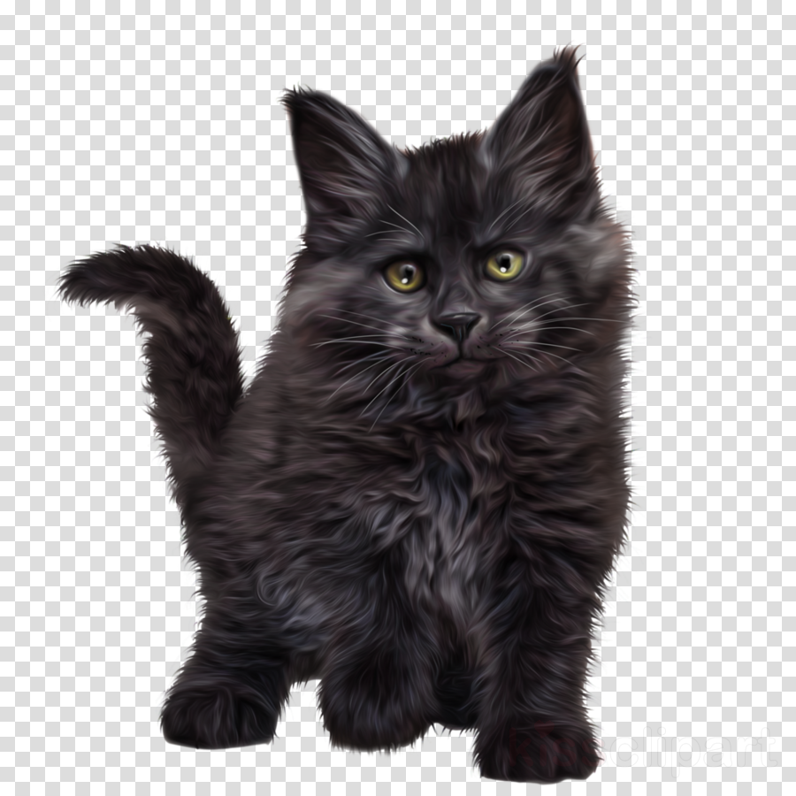 cat small to medium-sized cats black cat whiskers british longhair