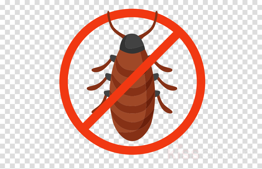 insect clip art cockroach pest termite