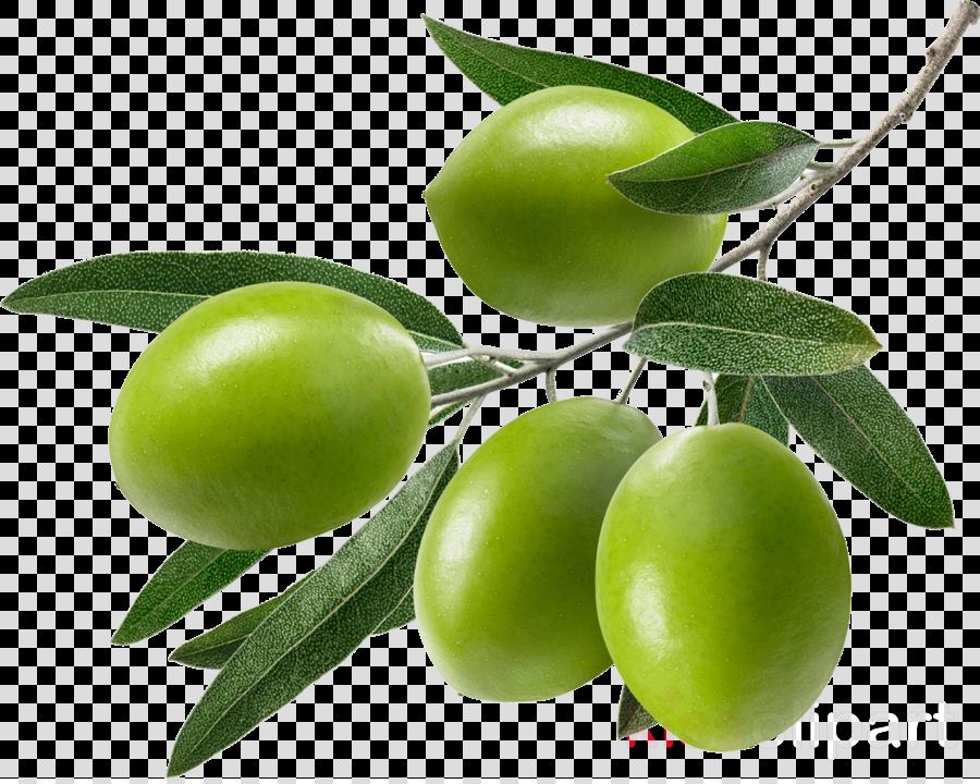 fruit plant tree european plum food
