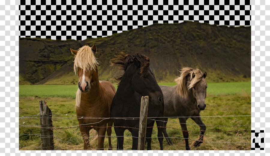 horse pasture mane pony shetland pony