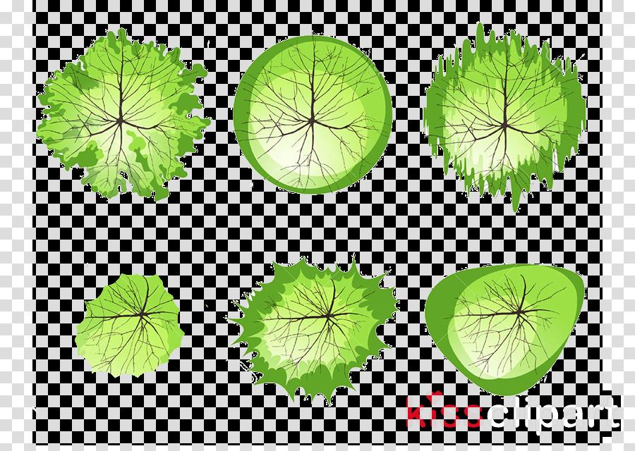 leaf plant bicycle wheel