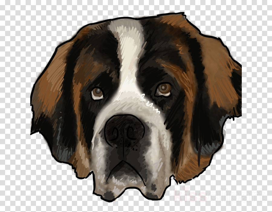 dog dog breed st. bernard moscow watchdog giant dog breed