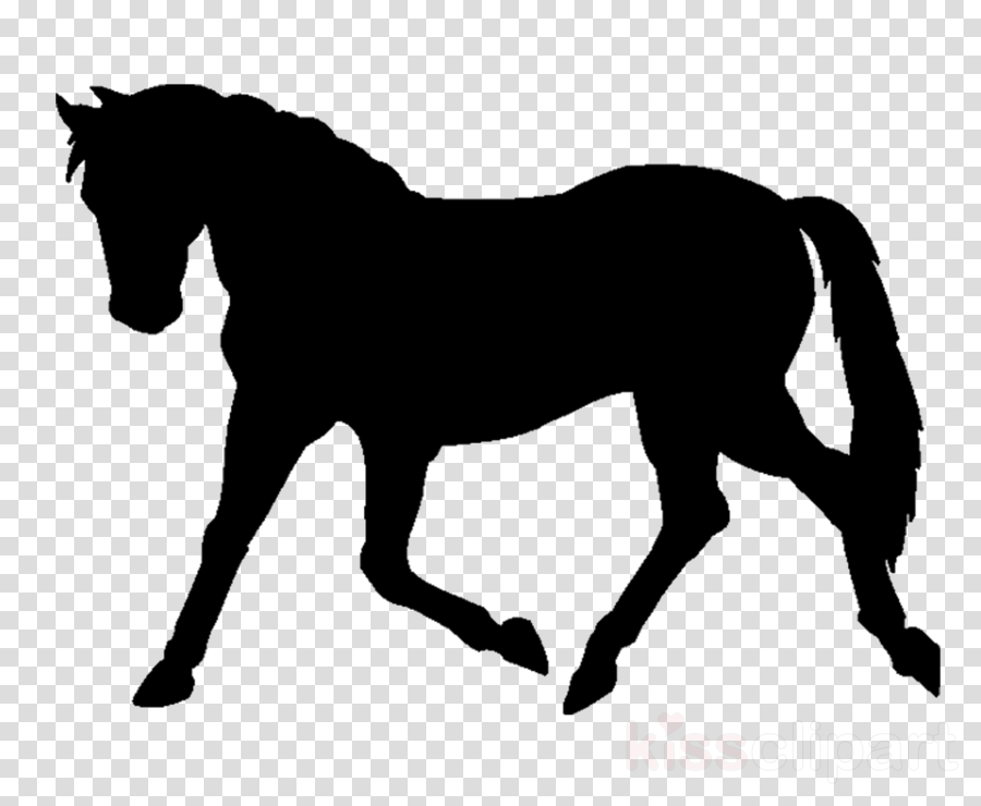 horse mane black animal figure mustang horse