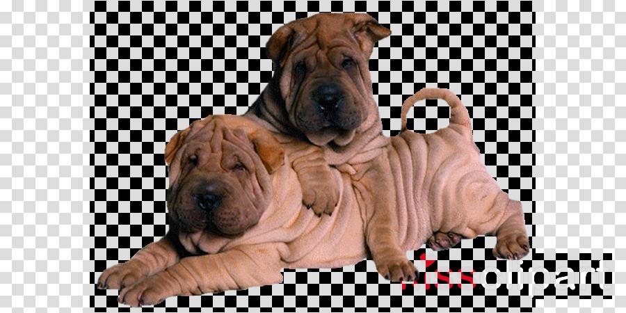 dog shar pei dog breed ori-pei non-sporting group