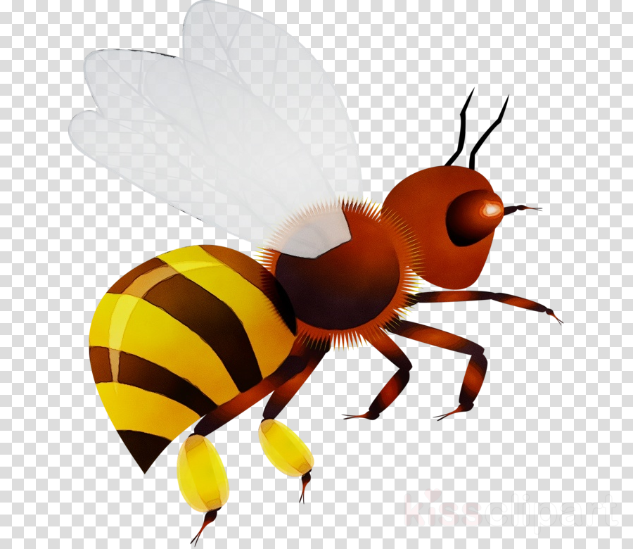 insect pest honeybee membrane-winged insect hornet