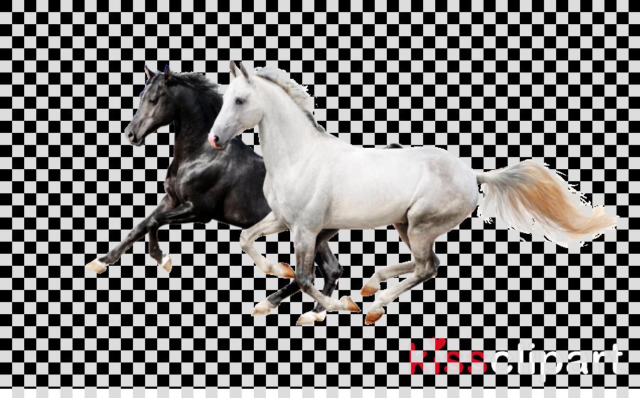 horse animal figure stallion mane mare