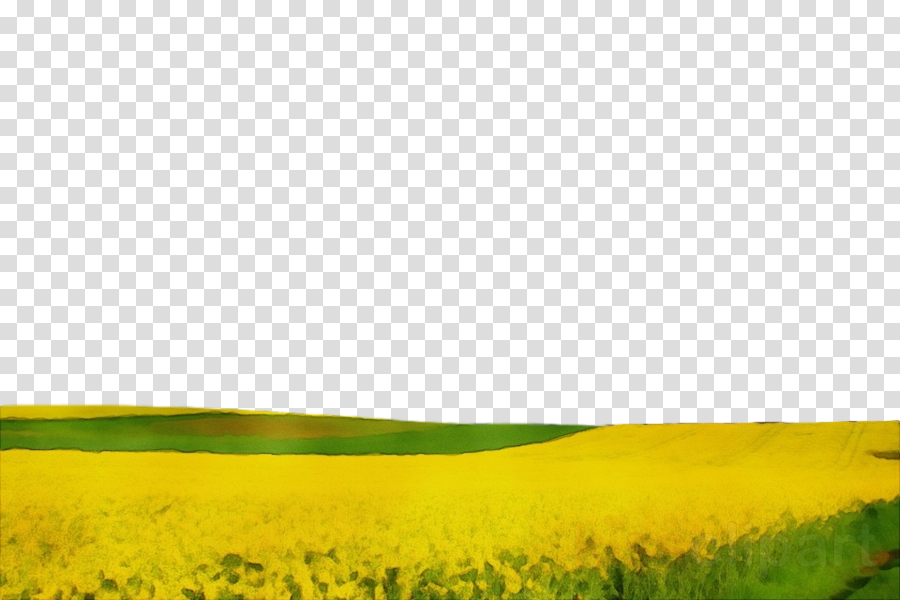 grassland field nature natural environment yellow