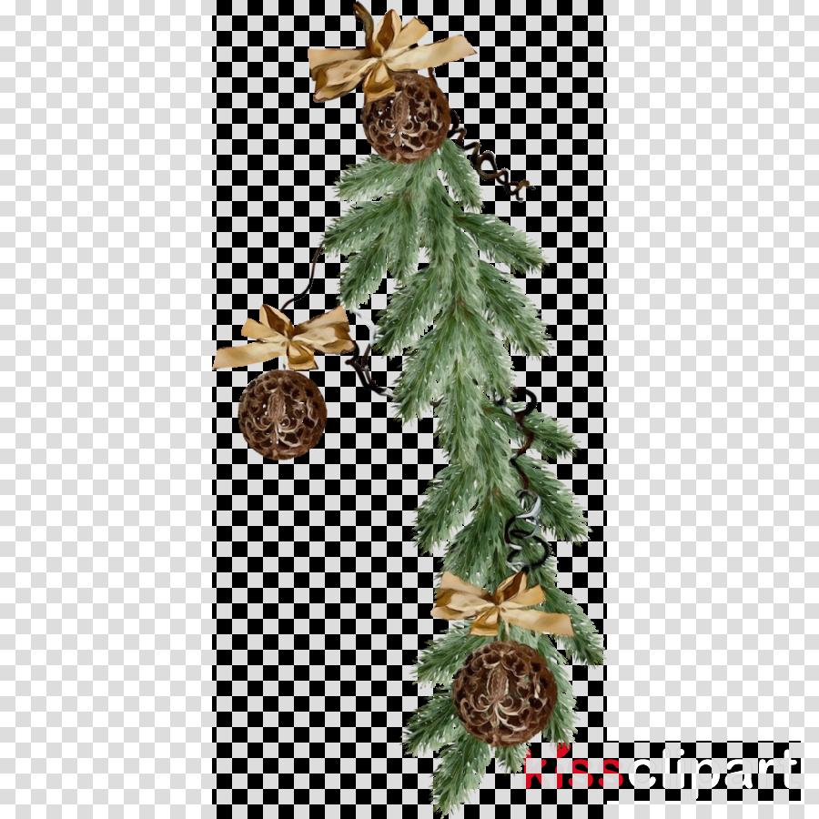 yellow fir tree oregon pine columbian spruce plant