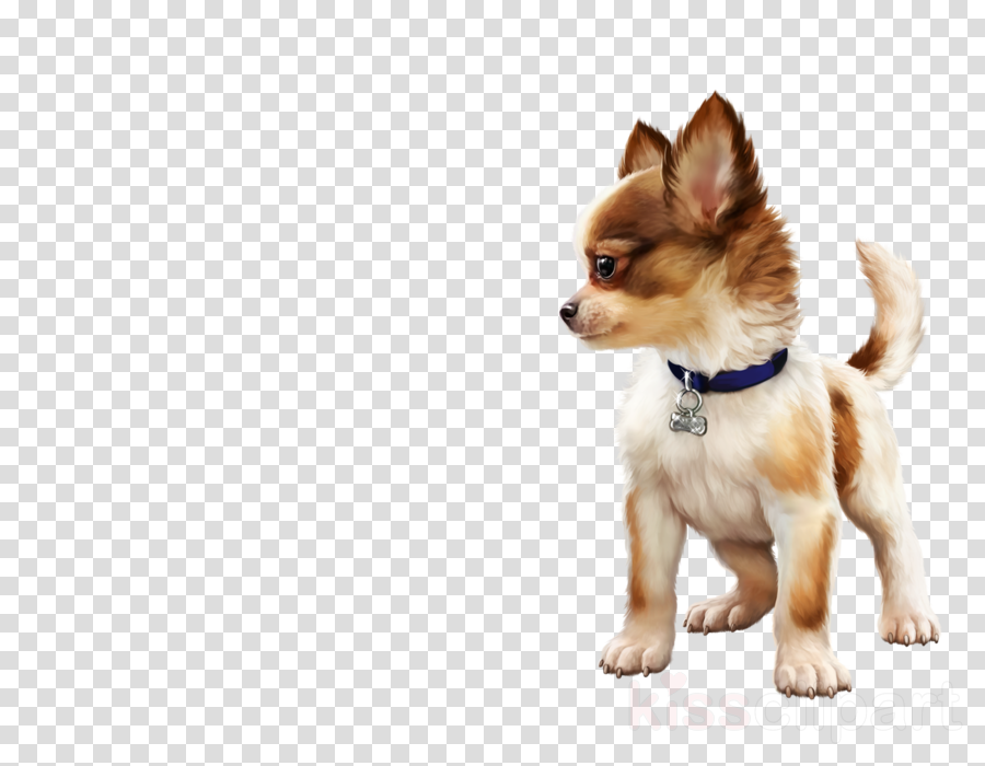 dog dog breed puppy snout rare breed (dog)