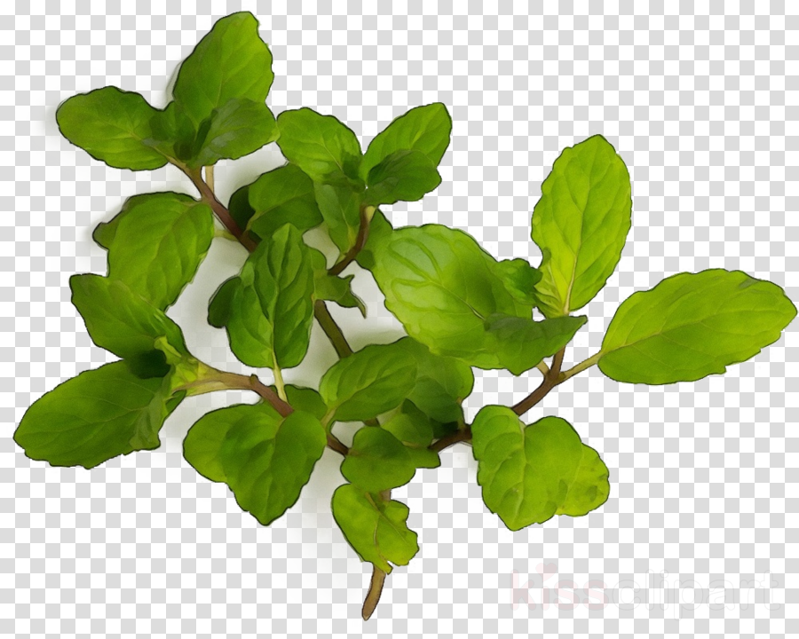 plant flower leaf flowering plant herb
