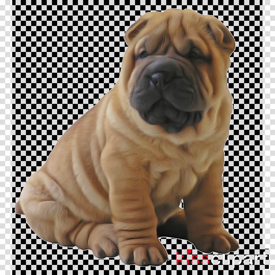 dog dog breed shar pei ori-pei skin