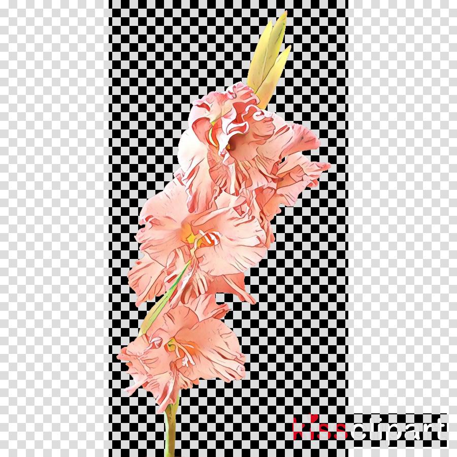 pink flower cut flowers gladiolus plant