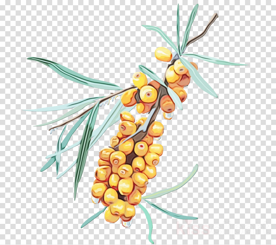 plant fruit tree branch food