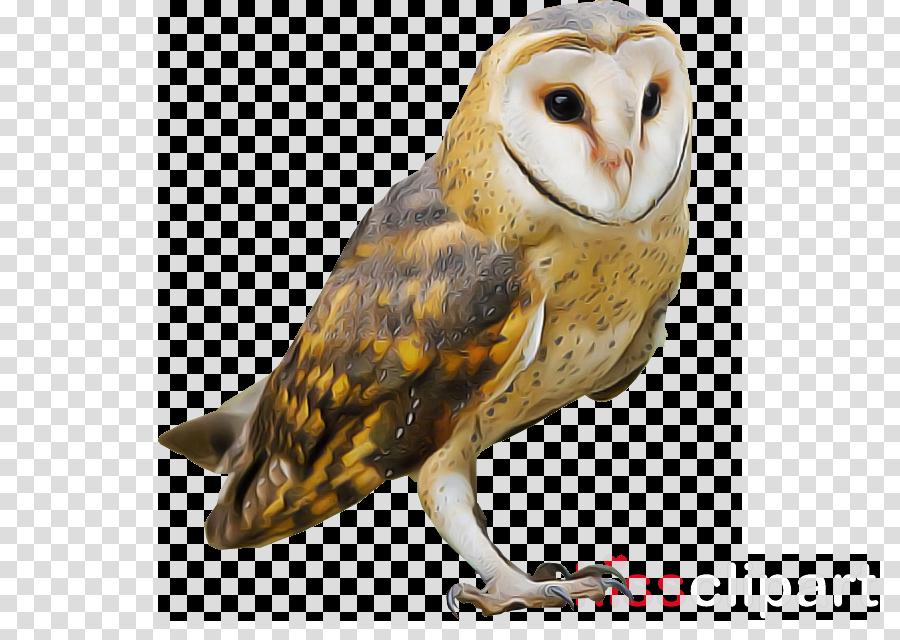owl bird barn owl bird of prey beak