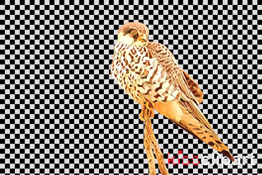 bird peregrine falcon falcon beak bird of prey