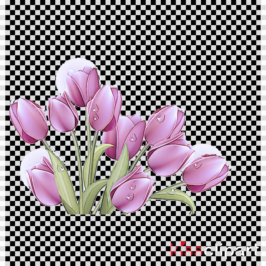 flower tulip plant petal flowering plant