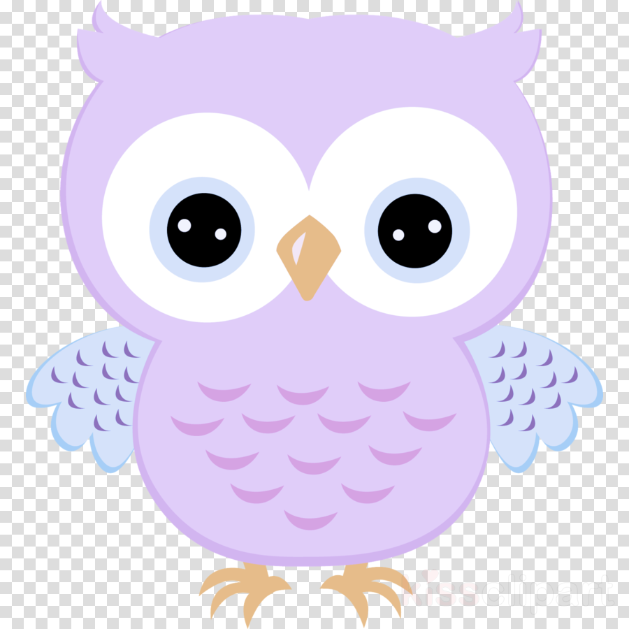 owl white bird of prey purple cartoon