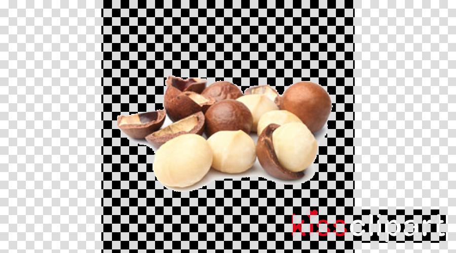 macadamia hazelnut food nut praline
