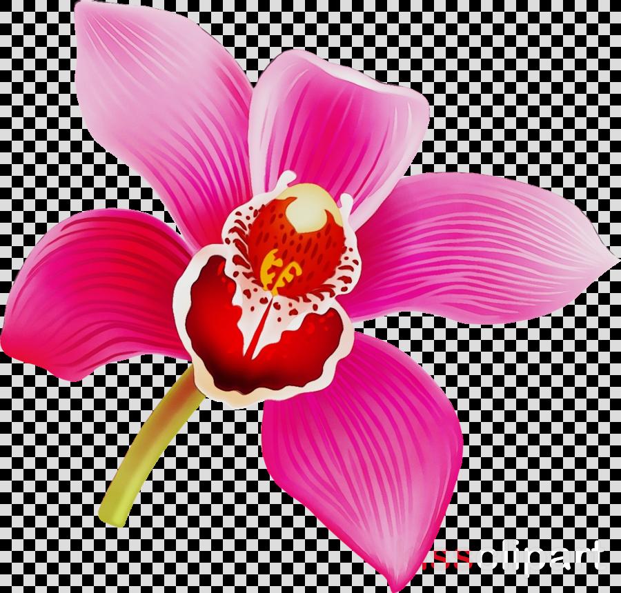 flowering plant petal flower pink plant
