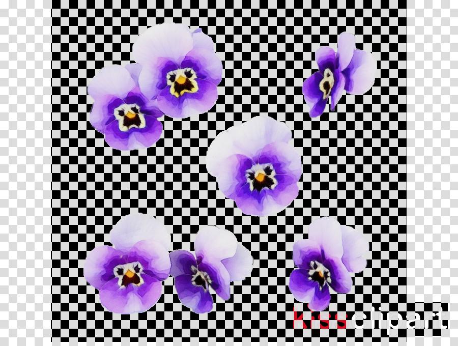 flowering plant violet purple flower petal