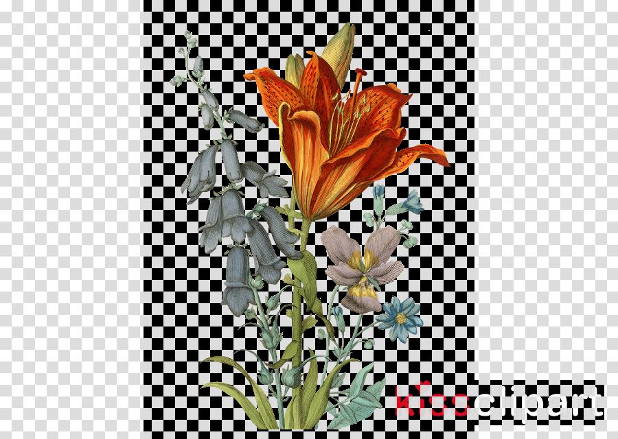 flower flowering plant plant lily orange lily