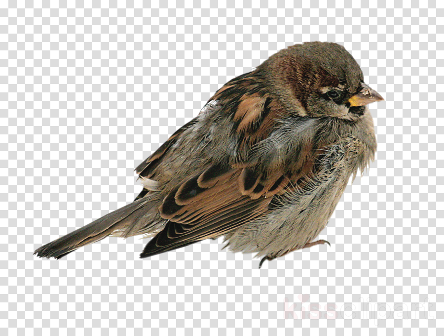 bird house sparrow sparrow beak songbird