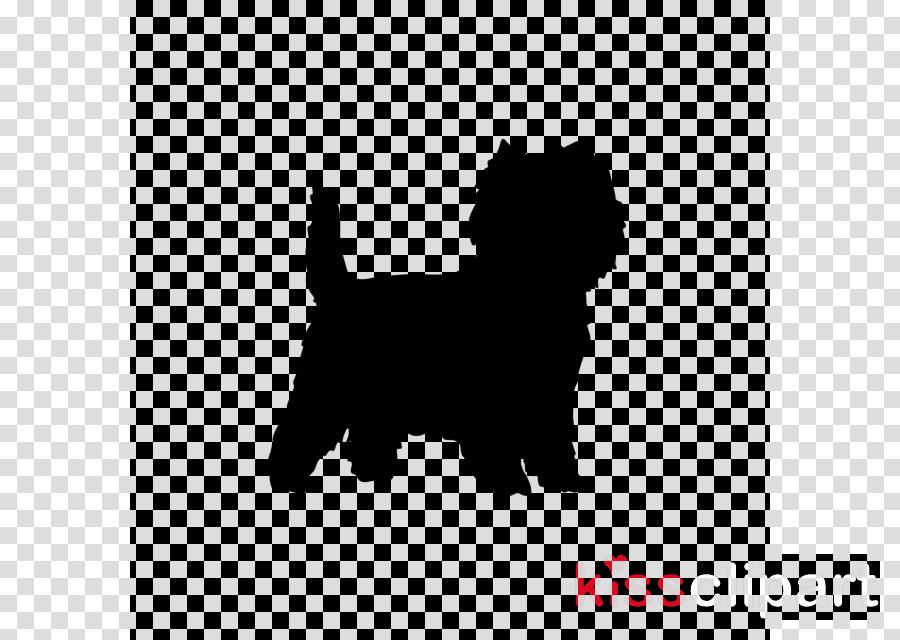 dog dog breed terrier rare breed (dog) norfolk terrier