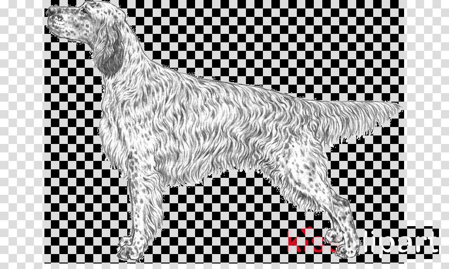 dog dog breed english setter setter sporting group