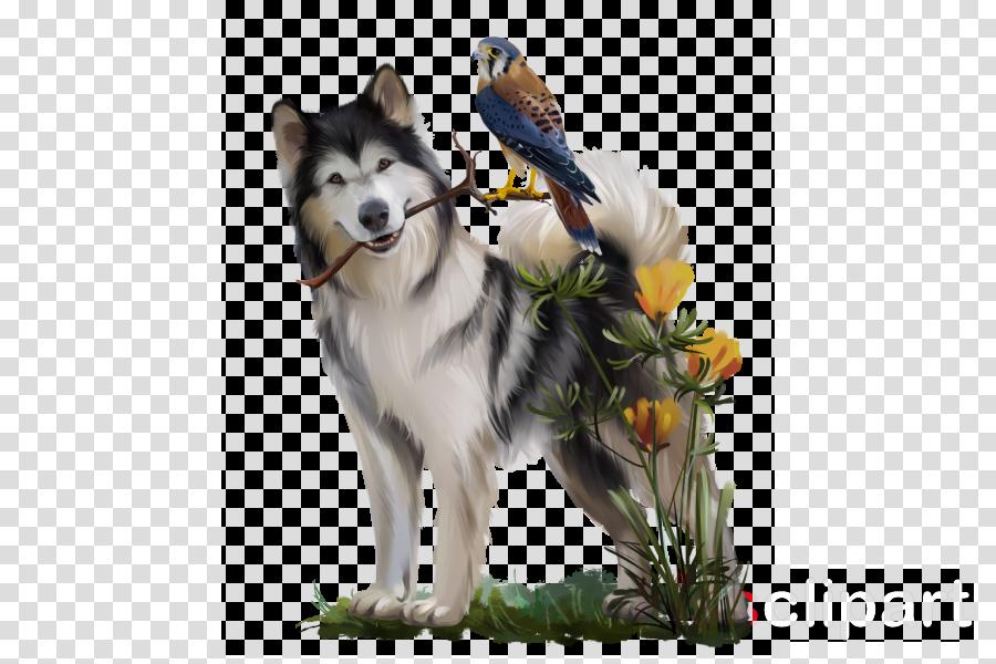 dog alaskan malamute siberian husky canadian eskimo dog northern inuit dog