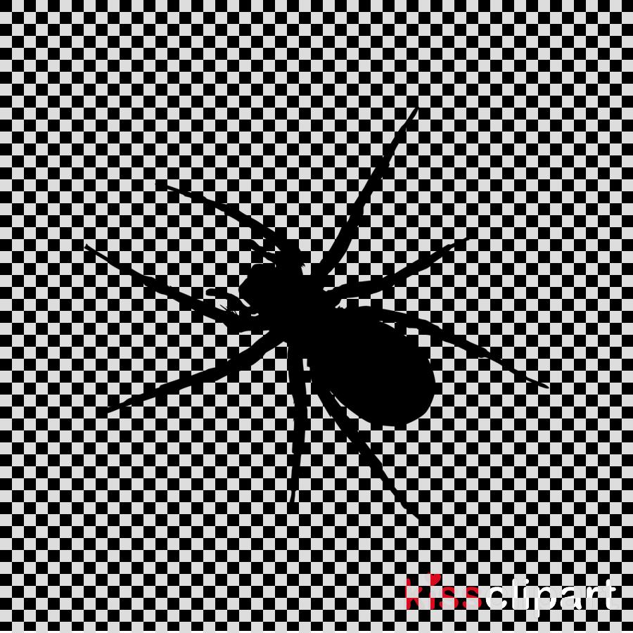 spider insect arachnid pest line