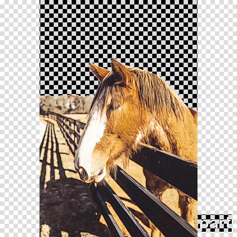 horse wildlife mane mustang horse stallion