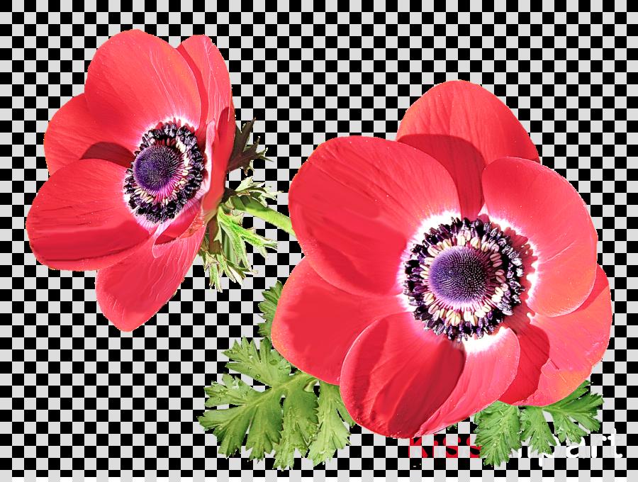 flowering plant flower petal plant pink